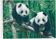 panda 3D Lenticular Holographic Stereoscopic Picture Wall Art
