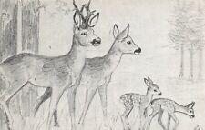 Vintage Postcard Art Sketch, Deer by Victoria Leigh (sunray series) 21T