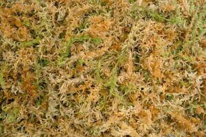 Sphagnum moss-20g of Dried Long Fiber Canadian Sphagnum moss