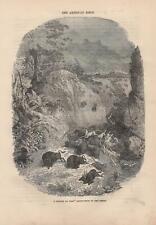 Präriefeuer Tierherde in Panik Bisons Antilopen HOLZSTICH von 1866