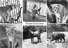 AK, Aschersleben, Tierpark, sechs Abb., 1983