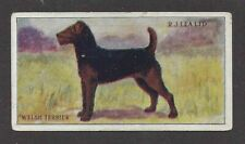 1923 Rare Uk Dog Art Rj Lea Chairman Cigarette Card Welsh Terrier