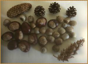 Bastel - Set - ganzjährig- Kastanien,Eicheln,Zapfen-Naturprodukte gepflückt