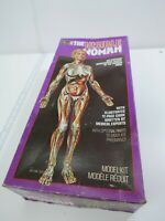 Vtg Revell Human Body Model Kit - The Visible Woman Kit H-901