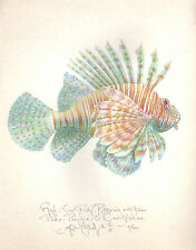 Ocean Sea RED LIONFISH - LARGE SIZE original handworked signed art print