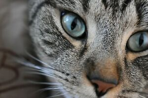 Tabby Cat Pet PHOTO print  DIGITAL FILE download only