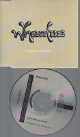 CD--PROMO--WHEATUS--AMERICAN IN AMSTERDAM