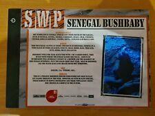 More details for sandwich wildlife park nocturnal animal sign (bushbaby)