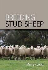 Breeding Stud Sheep 4864