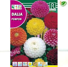 ROCALBA Dalia Pompon 2g Sobre de Semillas - Varios Colores (8423737091332)