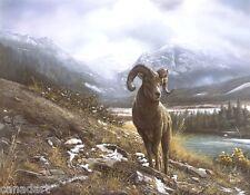 Denis MAYER Bighorn Sheep LTD Giclee Canvas LTD art Signed & Numbered 250 s/n
