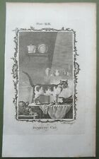 Domestic Cat Antique Print Feline Animal Copper Plate Engraving Buffon 1791