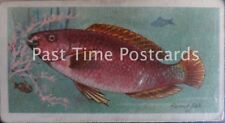 Single: 'PARROT FISH: FISHES OF THE WORLD' John Player Pub 1903