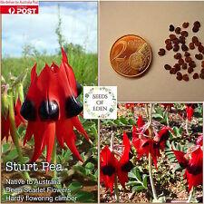 10 STURT PEA Seeds(Swainsona formosa); Australian Native Plant