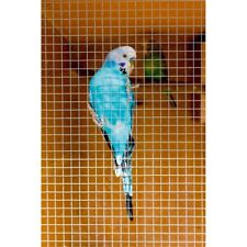 Supagarden Cage & Aviary Welded Panel, 0.6 x 0.9m