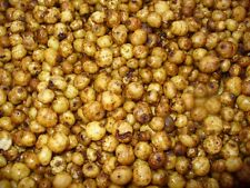tiger nuts 1kg fully prepared carp bait tiger nuts size small to medium