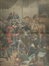 K0800 A Jarnac 4° leoni creano panico in un circo per i bimbi - Stampa antica