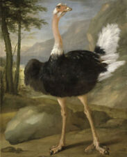 ZWPT767 fine bird ostrich modern hand-painted oil painting art on Canvas