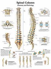Cartel médico A3-el humano columna vertebral (libro de texto médico de imágenes de anatomía)