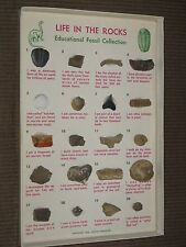 Life in the Rocks educational fossil collection 1963 Fossils Unlimited set