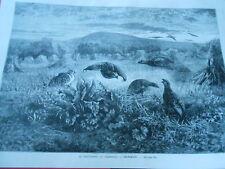 Gravure 1880 - Le calendrier du chasseur Septembre Les Cailles