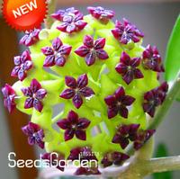 Hoya Flores Potted Flowers Bonsai Hoya Plants Orchid Home Garden 100 Pcs Seeds V