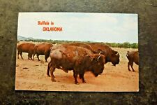 Vintage Postcard, Buffalo in Oklahoma, Posted