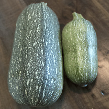 40 Gray Zucchini Summer Squash Seeds - Everwilde Farms Mylar Seed Packet