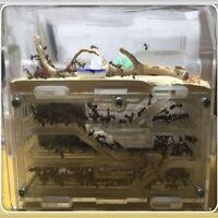 Ant Farm DIY Kit with Feeding Area Black Nest Educational Formicarium Acrylic US