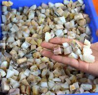 250-5000 Carat Natural Australian White & Pink Opal Gemstone Rough Lot