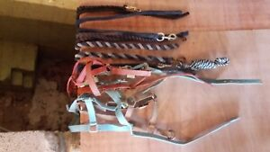 Head Collars and lead reigns for small Pony