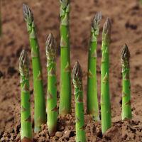 20PCS Asparagus Seeds Organic Heirloom Rare Green Vegetable Perennial Garden BI