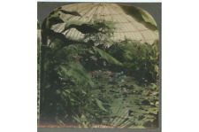 Lily Pond, Schenley Park, Pittsburgh, Pa, Color Stereoview
