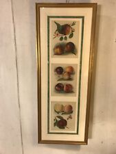 """Print 16""""x34"""" Peach Varieties 3 Panes Double Matted.C12pics4size/etc. MAKE OFFER"""