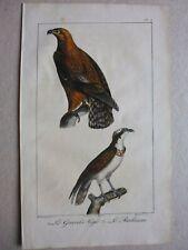 Gravure couleur 19°:Oiseaux:  le grand aigle....le balbuzar