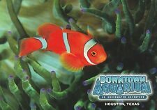 "*Postcard-""The Percula Clownfish"" (B24)"