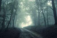 Framed Print - Trail through a Dark Grim Gothic Forest (Picture Poster Art)