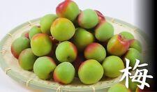 rare fruit - prunus mume - jap apricot umeboshi plant 梅