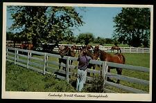 BLUE GRASS HORSE FARM IN LEXINGTON  KENTUCKY  VINTAGE CHROME POSTCARD COND:  VG