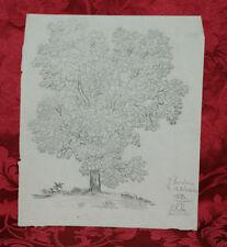 Disegno Antico 1832 Matita  Albero Bordeaux Rarissimo Famille Lanier
