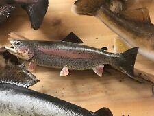 Speckled Trout Fish Taxidermy Cabin Decor