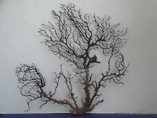 "14""x 12.4"" Large Black Gargonia Sea Fan Fish Tank Seashells Reef Coral"