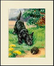 SCOTTISH TERRIER AND HEDGEHOG CHARMING DOG PRINT MOUNTED READY TO FRAME