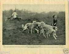 1930 Book Plate Dog Print Saliki Essex John Simmons Cherry Croft Kennel Bucks