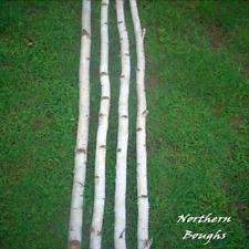 4 Medium White Birch Poles 8'