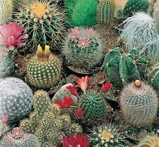 Cactus Seeds Mix Indoor Plant Species Bonsai Succulent Flower Seeds Home Garden