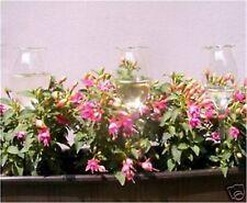 6 Stück Durstkugeln Bewässerungskugel für Blumenkästen Qualität AAA