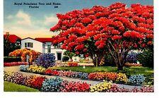 Vintage Color Linen Postcard - Royal Poinciana Tree and Home, Florida