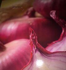 Red Onion Sets 10-dormant bulb Small Starter Bulbs