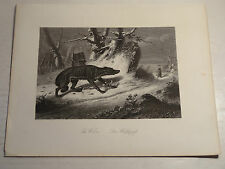 Little Medieval Wolfspafs A.H.Payne Etching Engraving red riding Hood Wolf Bad